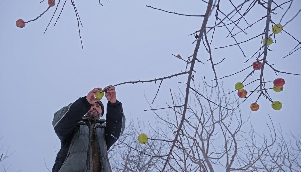 kuru-agac-dallarina-hayvanlar-icin-elma-asiyor-3206-dhaphoto5.jpg