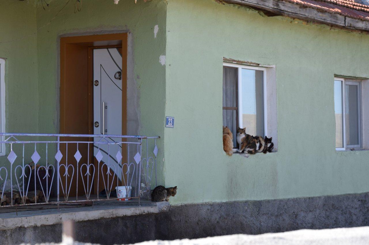 30-kediyi-besleyen-imam-onlara-baktiktan-sonra-allah-bize-ikiz-evlat-verdi-yeniden-2070-dhaphoto4.jpg