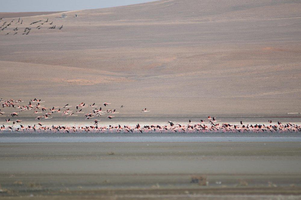 erken-gelen-flamingolar-havalar-soguyunca-tekrar-goc-etti-2641-dhaphoto1.jpg