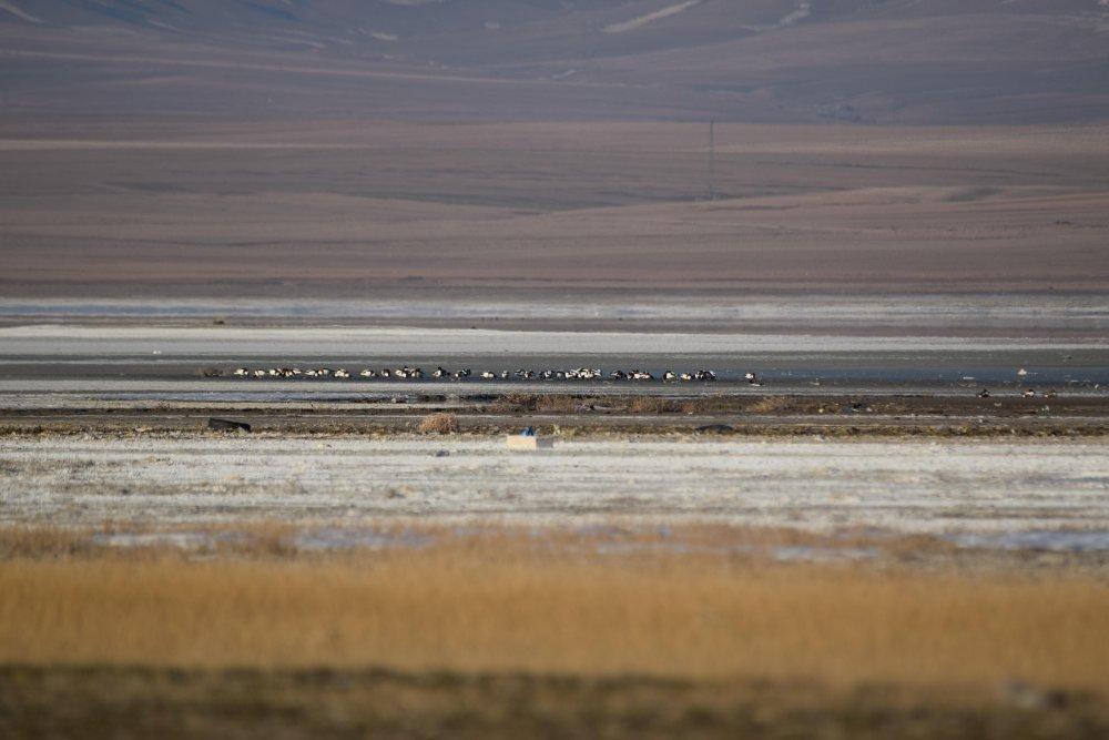 erken-gelen-flamingolar-havalar-soguyunca-tekrar-goc-etti-2641-dhaphoto5.jpg