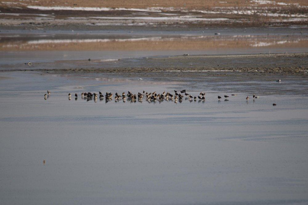 erken-gelen-flamingolar-havalar-soguyunca-tekrar-goc-etti-2641-dhaphoto7.jpg