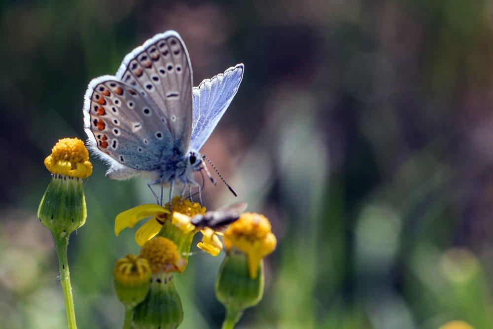 beysehir-golu-ve-cevresinde-167-tur-kelebek-yasiyor-2652-dhaphoto11.jpg