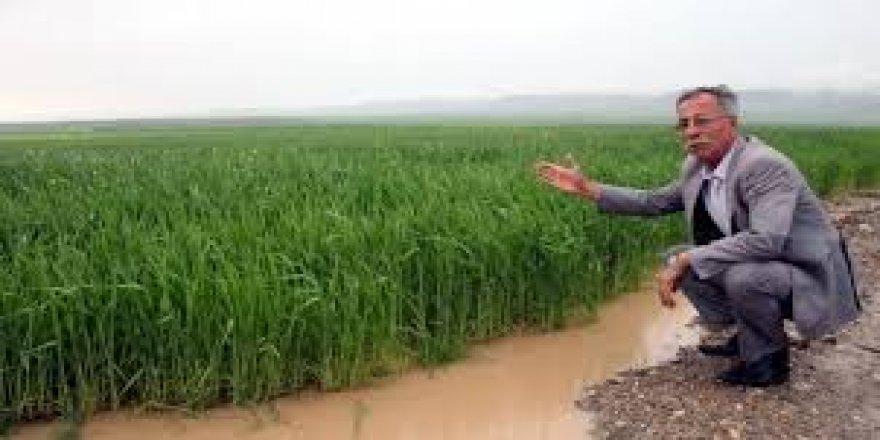 Konya'da ekili alanları sel aldı