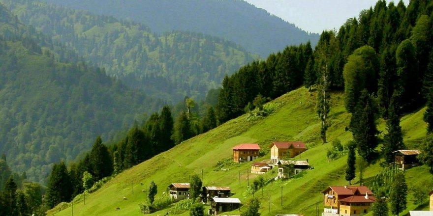 Karadeniz Ormanları