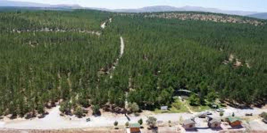 Konya Kent Ormanı