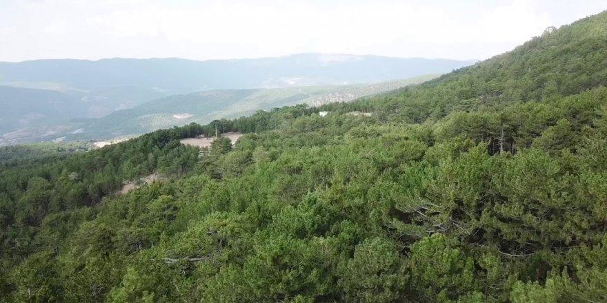 Murat Dağı