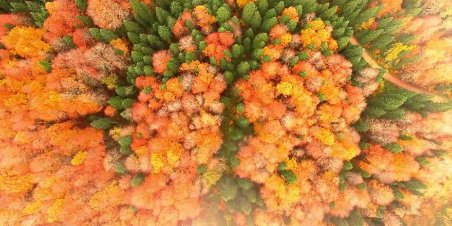 Küre Dağları Tanıtım Filmi Biyolojik Çeşitlilik ve Jeoloji